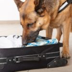 Drug Dog Found Ecstasy In Passenger Luggage For Holy Ship Cruise