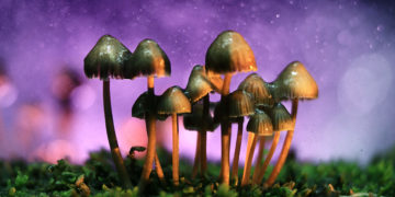 Denver Wants to Decriminalize Psychedelic Mushrooms