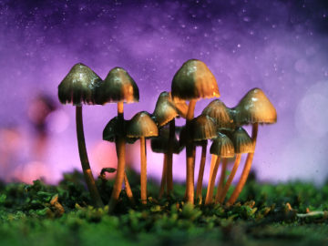 Denver Wants to Decriminalize Psychedelic Mushrooms
